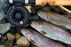 Eksport ryb ciągle rośnie