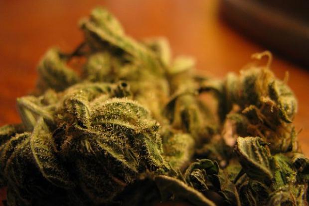 3 tony marihuany w rękach policji