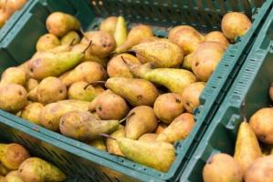 Ceny gruszek w hurcie kosztują 2-5 zł/kg