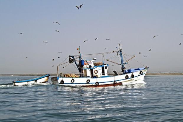 Jest decyzja ws. limitów połowowych na Bałtyku