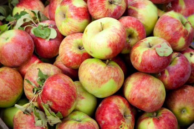 Polskie jabłka stały się międzynarodowym symbolem rosyjskiego embarga