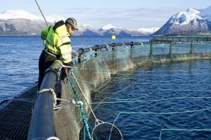 Marine Harvest Kanada zainwestuje 30 mln dolarów w technologię recyrkulacji
