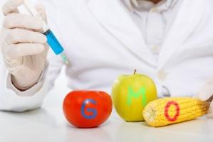 UE: Porozumienie i dalsze dyskusje w sprawie GMO (video)