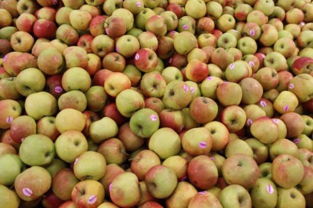 Eksport jabłek bardziej zróżnicowany