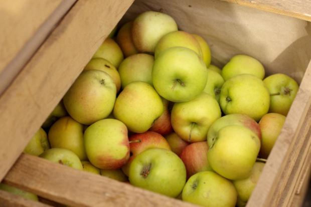 Sezon jabłkowy 2015/16 zapowiada się obiecująco
