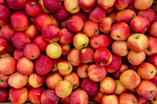 Stabilne ceny jabłek przemysłowych
