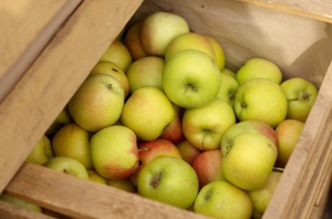 Rosja bezwzględnym liderem produkcji jabłek wśród krajów WNP