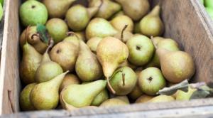 Ceny gruszek na rynkach hurtowych sięgają 2-4 zł/kg