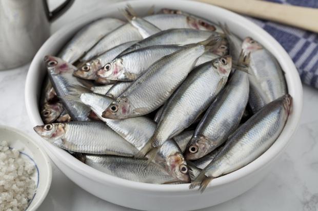Produkcja ryb wzrosła o 4,3 proc.