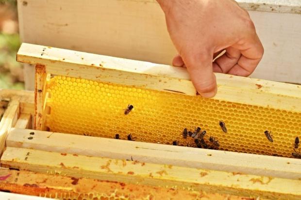 Wraz ze wzrostem popytu na miód, rośnie liczba pszczelarzy