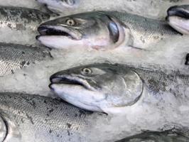 Ajtel chce zbudować globalną grupę przetwórstwa rybnego