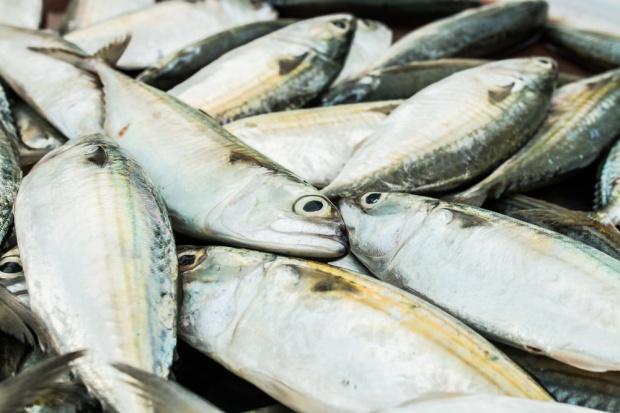 Połowy ryb na Bałtyku wyższe o 10,6 proc.