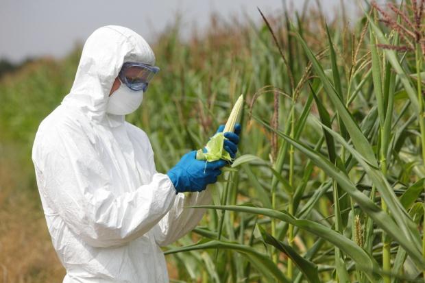 19 państw członkowskich UE bez upraw GMO