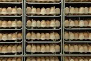 Ceny jaj spożywczych spadają