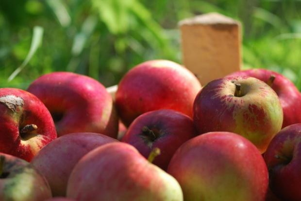 Polskie jabłka ruszyły w świat