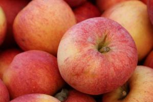 Na Ukrainie powstaje duża przetwórnia jabłek