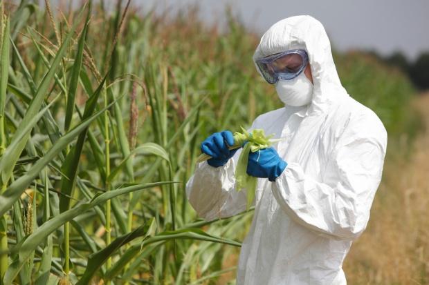 Greenpeace opublikował raport nt. upraw GMO