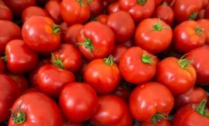 Wkrótce ruszy kampania promująca spożycie pomidorów za 3 mln euro