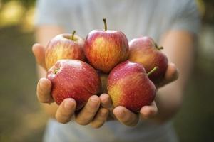 Jabłka ruszyły w świat
