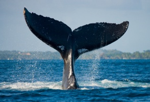 Atak na stronę internetową japońskiego premiera za połowy wielorybów