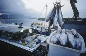 Eksport ryb wyższy o 14,1 proc.