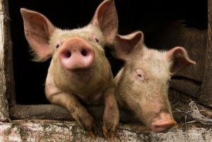 Unijny komisarz ds. rolnictwa przeciw polskiej propozycji dopłat do eksportu