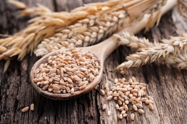 W najbliższych latach powolny wzrost produkcji zbóż w Unii Europejskiej