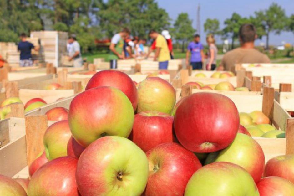 IERiGŻ: W 2015 r. wzrośnie eksport warzyw, owoców i ich przetworów