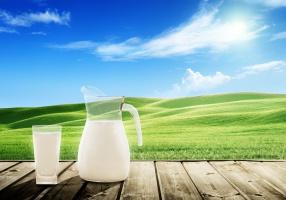 Listopadowy skup mleka niższy o 6 proc.