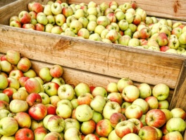 Relatywnie wysoki poziom zapasów jabłek w UE