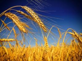 Ceny zbóż minimalnie w górę