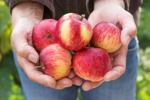 Zmieniają się kierunki eksportu jabłek