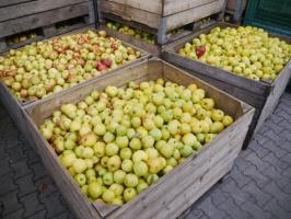 Mniej jabłek w unijnych magazynach w grudniu, więcej - gruszek