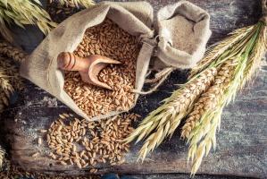 Spadają ceny zbóż w skupach