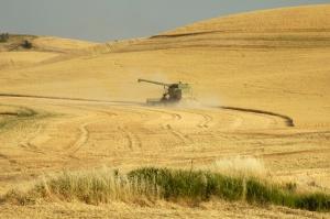 USDA: Amerykańscy rolnicy sieją mniej pszenicy ozimej