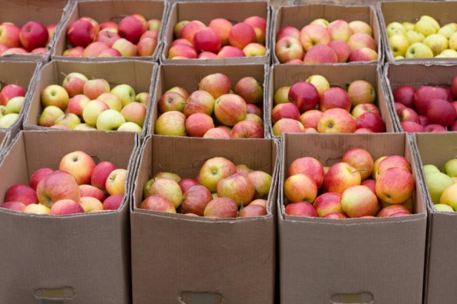 Ukraina: Import jabłek z Polski stał się nieopłacalny