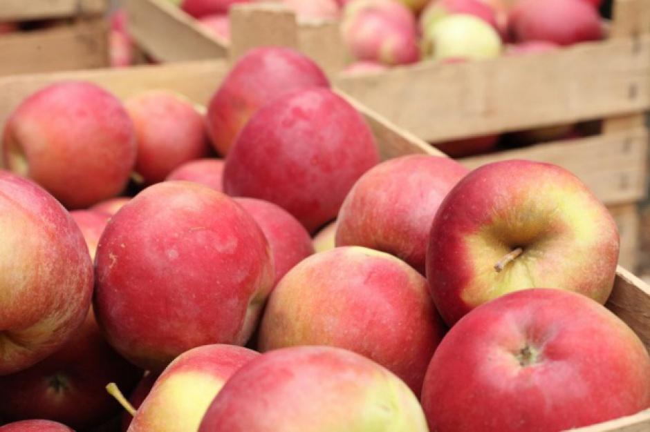 Producenci jabłek z UE mają łatwiejszy dostęp do rynku indyjskiego