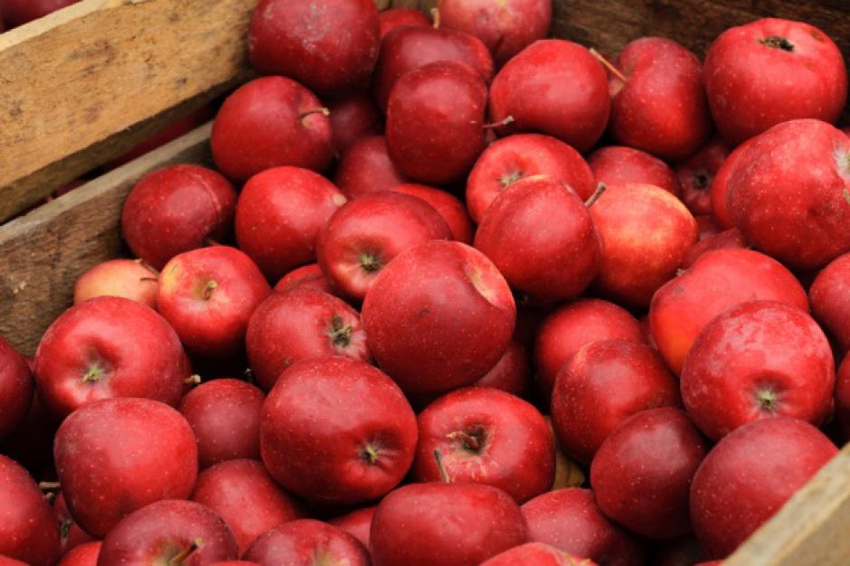 Łatwiejszy dostęp dla unijnych jabłek do rynku Indii