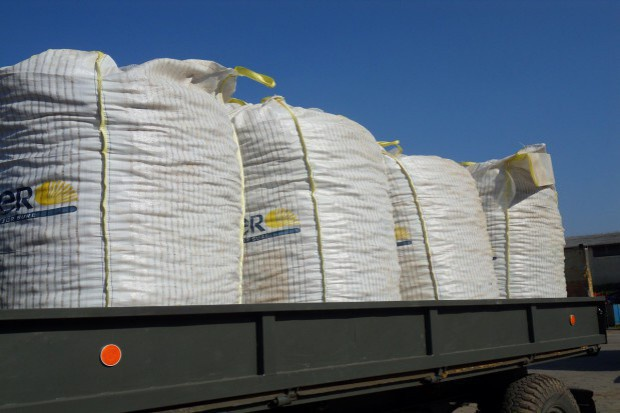 Strategie Grains zmienia prognozy zbiorów zbóż w UE
