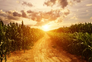 Korzystne perspektywy dla argentyńskiej kukurydzy
