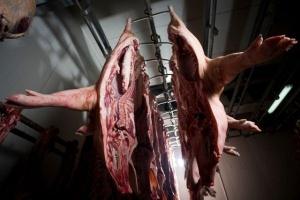 Kraje UE zgłosiły do przechowania z dopłatami 89,9 tys. ton wieprzowiny