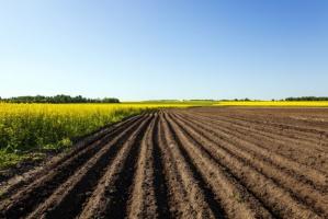 Izby rolnicze pozytywnie o wstrzymaniu sprzedaży państwowej ziemi