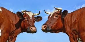 Argentyna dostarczy do UE wołowinę ze strefy buforowej