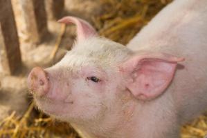 Francja: nadzwyczajne środki wsparcia dla hodowców