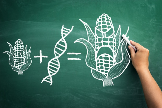 Komisja Europejska zrezygnuje z prób zakazania importu pasz GMO?