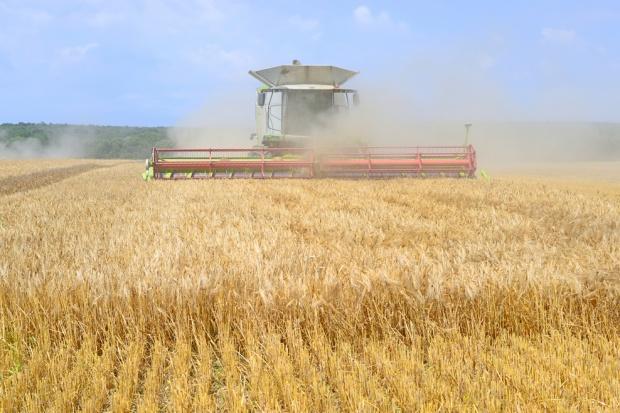 Ukraina: Zbiory ziarna w 2015 mniejsze z powodu suszy