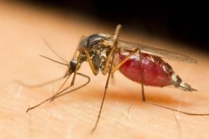 Wirus Zika dotarł do Hiszpanii