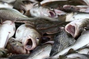 Konflikt i podziały w branży rybnej? Powstanie kolejne stowarzyszenie przetwórców