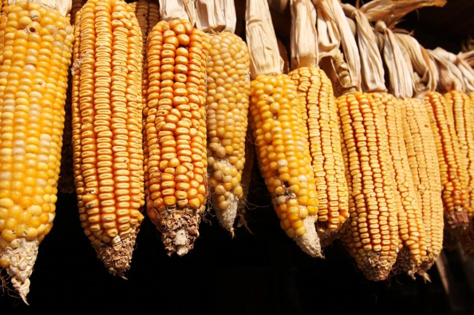 Chiny obniżą ceny kukurydzy aby pobudzić popyt