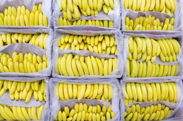 Trudny rok dla sektora produkcji bananów